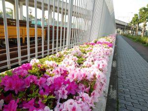 ツツジ(大阪市)